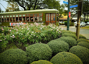 St Charles Avenue New Orleans Landscaping by Landscape Images