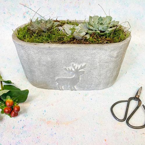 Planted Stag Succulent Pot