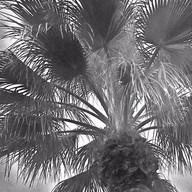 Palm Springs In The Sky #6