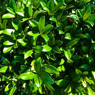 PLANT_8x12-STOW.jpg