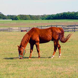 HORSE1_12x9_STOW.jpg