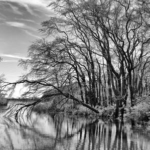Paul_Dempsey-Sagg_Swamp_Preserve.jpg