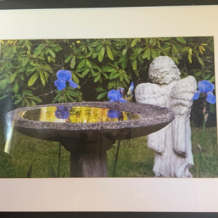 Reflections Rosa Hanna Scott 25x19 $300.