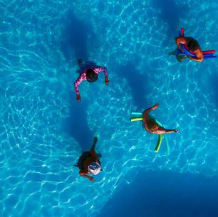 Paul Dempsey - Water Lillies - 20x40 - m