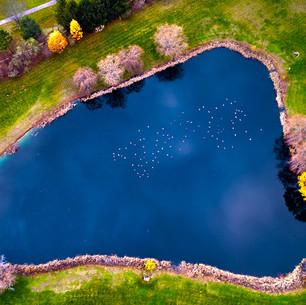 Paul Dempsey - Ducks On The Pond -20x40