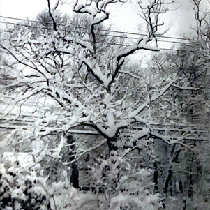 Snowtime Rosa Hanna Scott Photography $3
