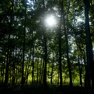 FOREST_24.5x16.5_STOW.jpg