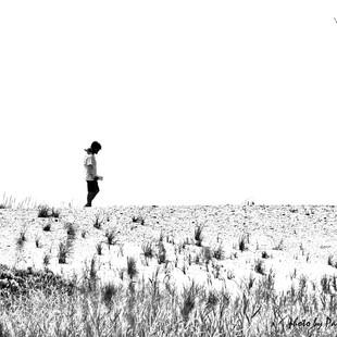 Paul Dempsey -Dune Walker - 16x20 - dye