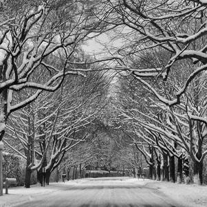 2553 - The Face Of Winter.jpg