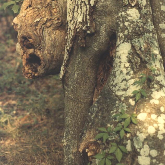 Gerard Giliberti_Beauty and the Beast_8x