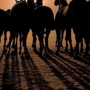 Bryan Downey Horses legs.jpg