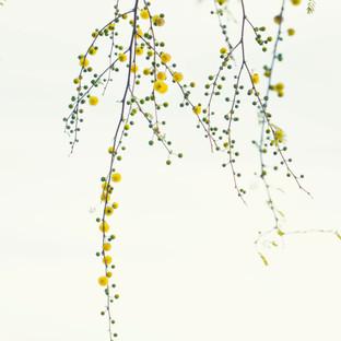 Jim Mannix ARTFUL FLOWERS 15.1 X 22.7.jpg