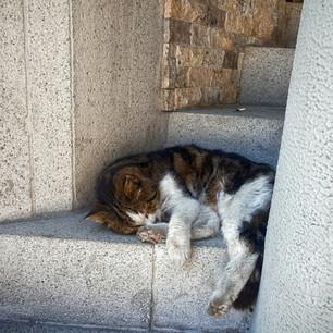 Jim Mannix SLEEPING 17 X 12.jpg
