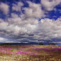 spring in the desert 20 x 30.jpg