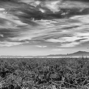 Jim Mannix Salton Sea Vinyard 30 x 16.jp
