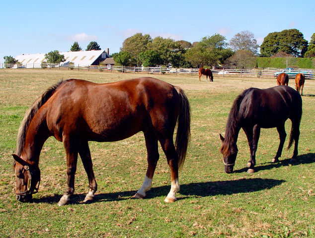 HORSES_11x14_STOW.jpg