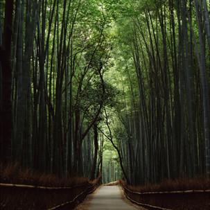 Luciana Pampalone Bamboo Forest Kyoto.jp