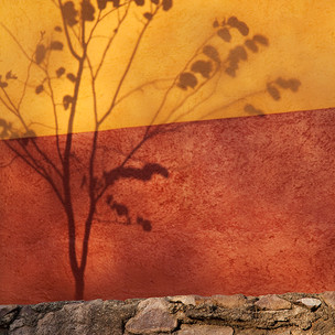 Shadow_in_Garden._14_x21__Printed_on_pho