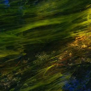 Jim Mannix FLOWING 40 X 17.jpg