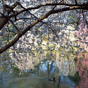Betsy Pinover Schiff, Pond Reflexion, 13