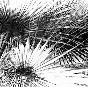 Jim Mannix PALMS  20 X 13.5.jpg