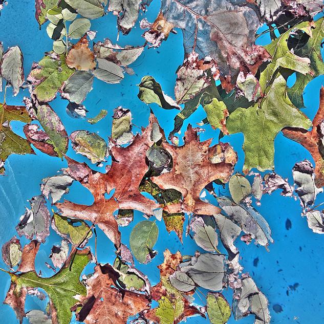 Paul Dempsey - Make Like A Tree - 16x20