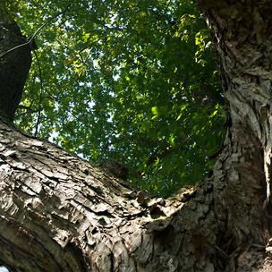 TREE_24.5X16.5_STOW.jpg