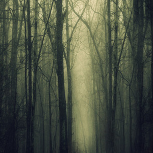 Kristina Gale Into the woods.jpg 24x14.j