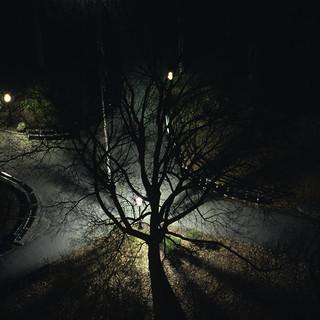 BetsyPinoverSchiff,Eerie Night,10x15.5_.