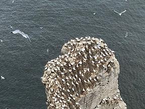 Bempton Cliffs.jpg