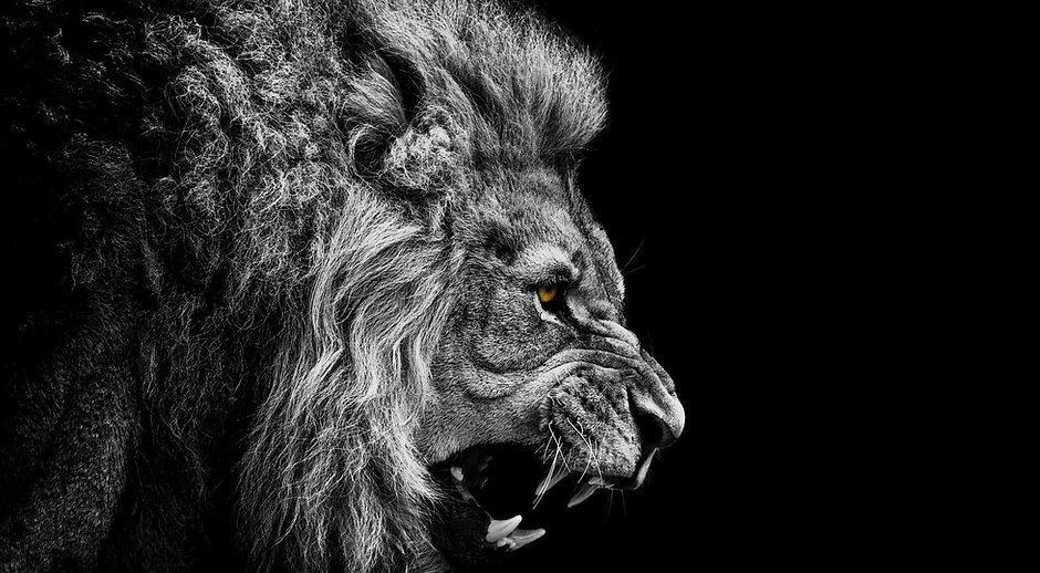 801573-fierce-lion-wallpaper.jpg