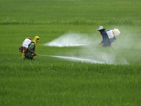 รู้หรือไม่ ยาฆ่าหญ้าอันตรายต่อสุขภาพและสิ่งแวดล้อม
