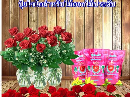 เคล็ดลับปลูกกุหลาบตัดดอก ให้ได้คุณภาพดี โดนใจผู้ซื้อ