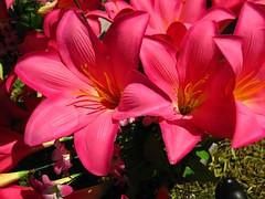 flower-1632447__180.jpg