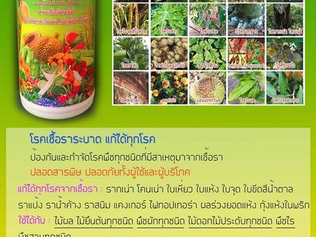 5 โรคพืช ระบาดหน้าฝน และวิธีป้องกัน