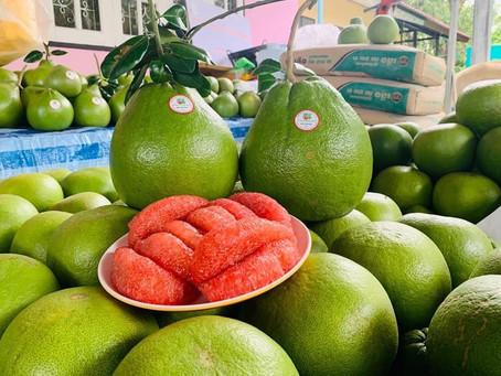 ส้มโอทับทิมสยาม พืชเศรษฐกิจ สู่รายได้หลักของชาวปากพนัง