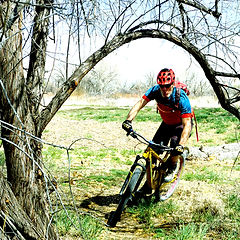 picture of mountain bike going threw trees by Confluence Lake in Delta, CO.