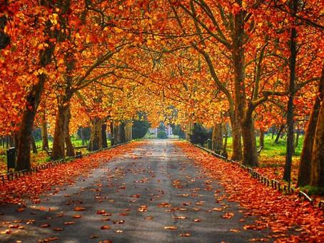 Que venha o Outono!