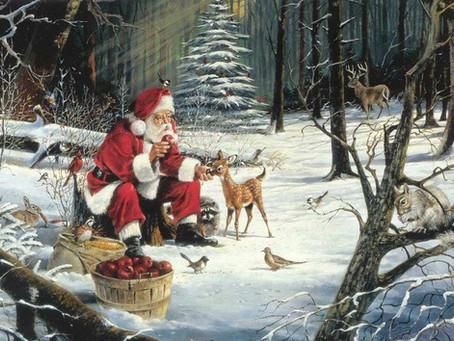 História de Noel