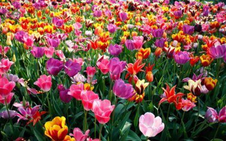 Primavera no seu coração!
