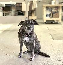 Woodshop dog - woodworking studio - woodshop - handmade furniture - Chicago dog - Chicago wood shop