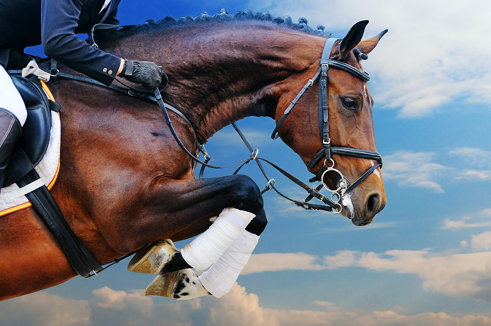 Bay horse in jumping show against blue s
