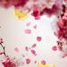 floral 1 p.png
