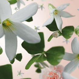 Floral 8 p.jpg