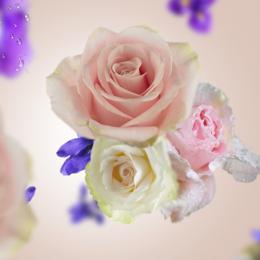 Floral 7 p.png