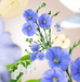 Floral 5 p.png