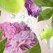 Floral 10 p.png