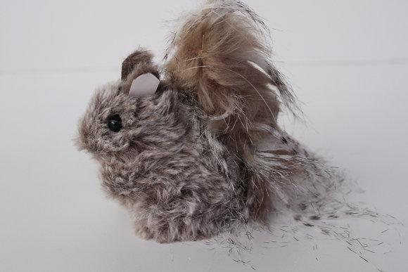Ecureuil en poils