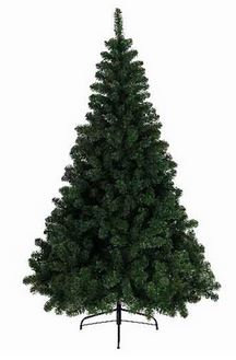 Sapin Imperial NF vert