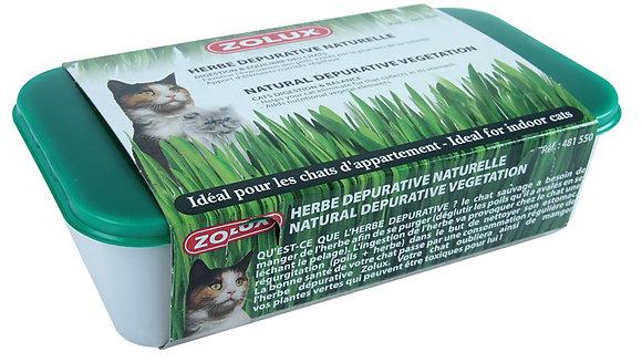 Herbe à chat dépurative naturelle